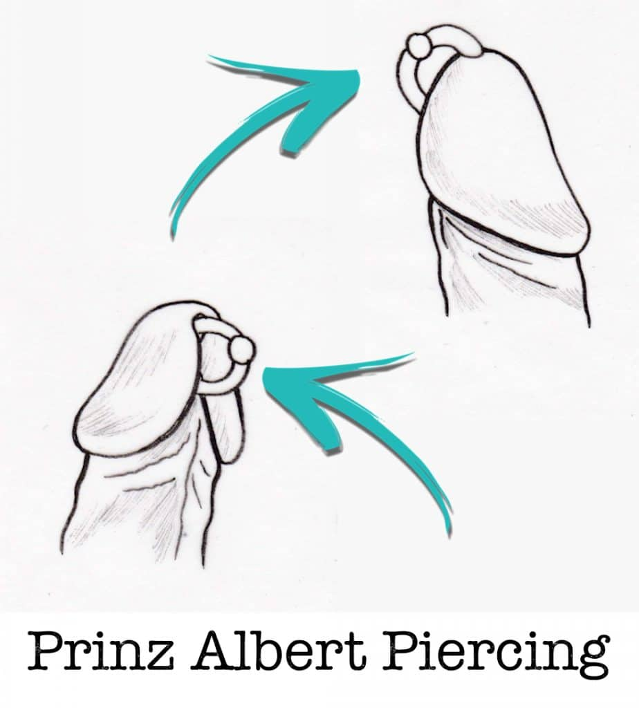 Prinz albert PA piercing piercing ABC ink station stuttgart piercingstudio..