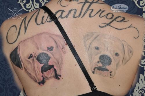 American bulldog portrait Dogportrait Bully AMBULL Stuttgart Tattoo inkstation tätowierung 0711 blackandgrey bully (7)